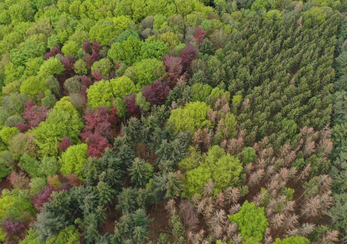 Arboretums-copyright_C.-Cuvelier