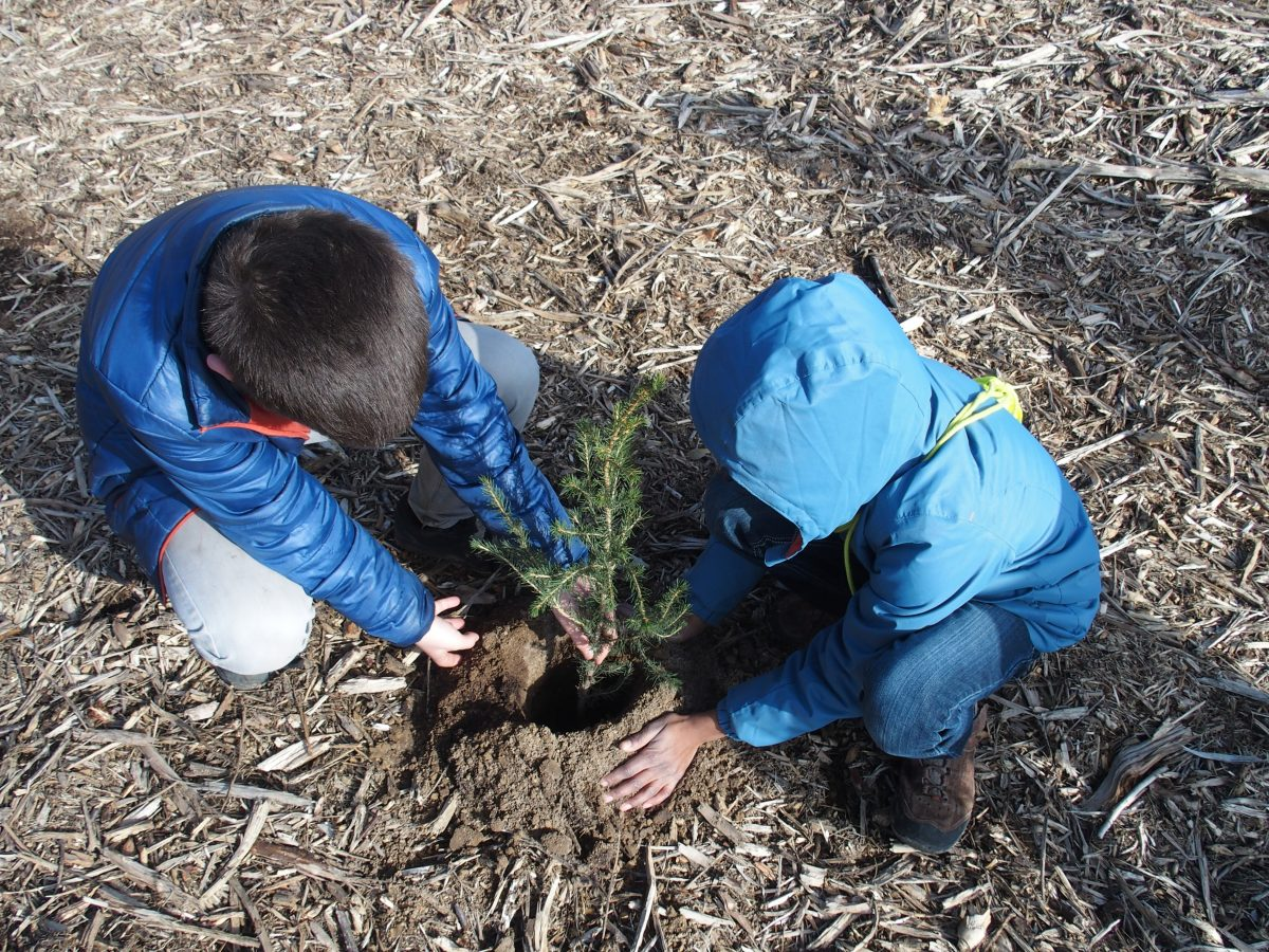 Enfants plantant un arbre_Forest Friends